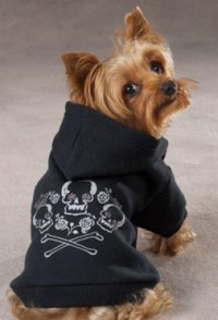 Yorkie Outfits: For The Fashion Conscious Yorkie Owner ...