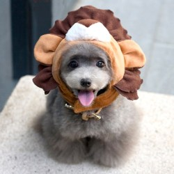 Small Of Dog Lion Costume