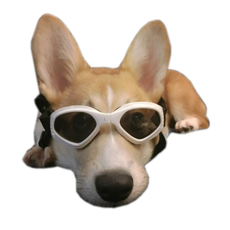 Large Of Dogs With Glasses