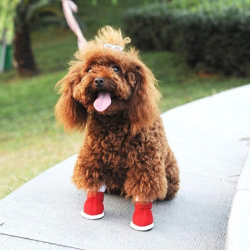 Medium Of Dog Snow Boots