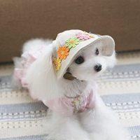 UEETEK Dog Cat Puppy Pet Chihuahua Sport Cap Bucket Hat