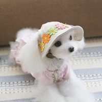 UEETEK Dog Cat Puppy Pet Chihuahua Sport Cap Bucket Hat ...