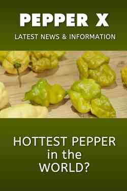 Fantastic Information Chili Pepper Madness Pepper X Last Dab Scoville Pepper X Scoville Range Pepper X Latest News Information Pepper X Latest News