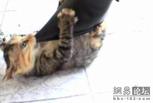 High heel kitten killer with kitten playing with heel