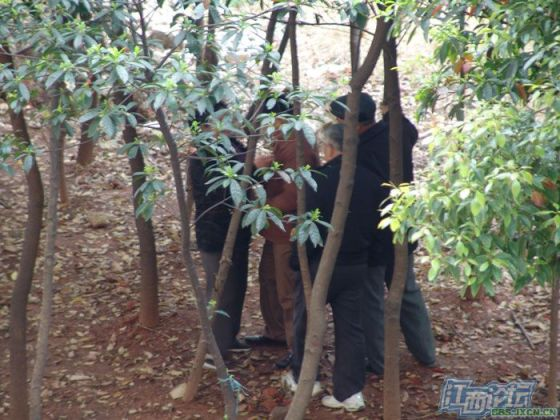 chinese-elderly-in-woods-doing-naughty-things-nanchang-02