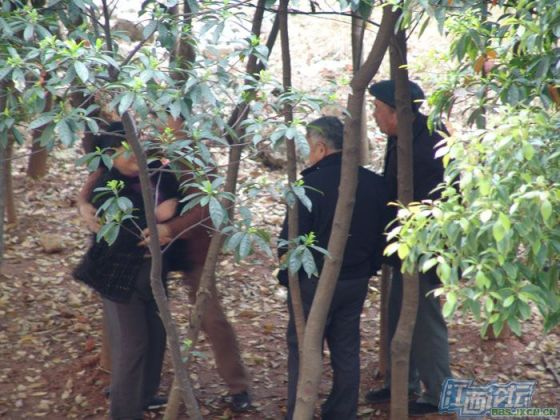 chinese-elderly-in-woods-doing-naughty-things-nanchang-03