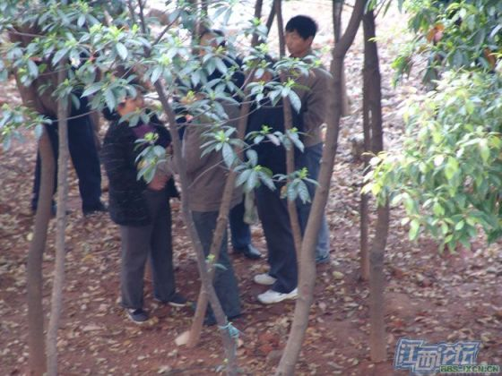 chinese-elderly-in-woods-doing-naughty-things-nanchang-05