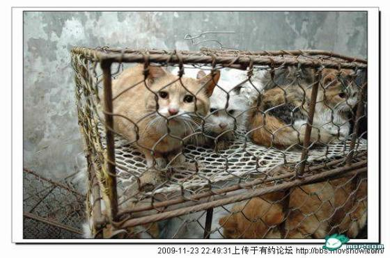 cats-cages-tianjin-china-03