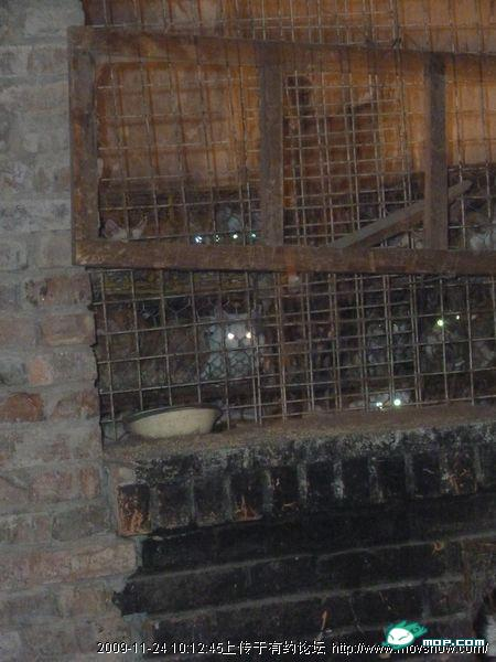 cats-cages-tianjin-china-11
