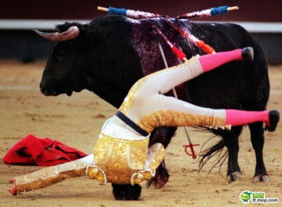 A Spanish matador is on his head by a bull.