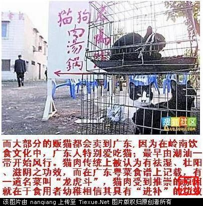 Caged cats to be sold for their meat.