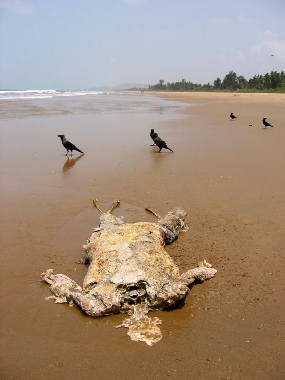 The remains of a person on the beach.