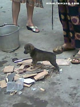 A puppy on the street in China.