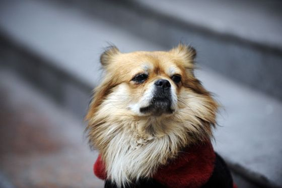 "A Chongqing dog waiting outside for its owner for 4 years has gone viral on Chinese internet for being the ""most loyal dog"" and is compared to Japan's Hachiko."