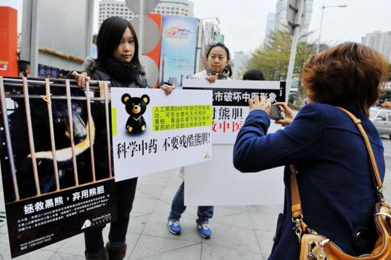 Young Chinese protesters in front of a Guizhentang store in Shenzhen, protesting against the extraction of bear bile from live bears for traditional Chinese medicine uses.