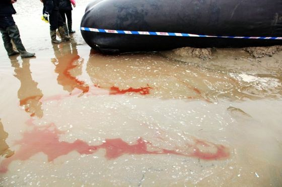 Blood leaking into the water from a whale that was stranded on a Chinese beach.