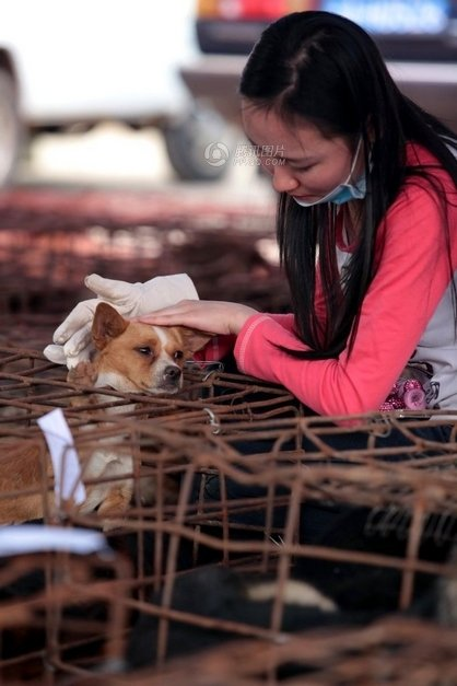This picture shows a netizen is petting the dog.