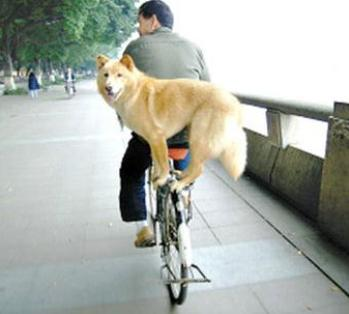 dog standing on a bike