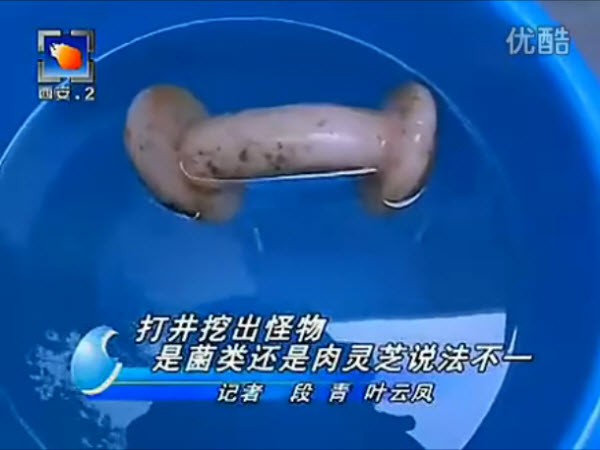 On a Chinese news program in Xi'an, China, a female reporter mistook a male masturbation toy as a rare mushroom.