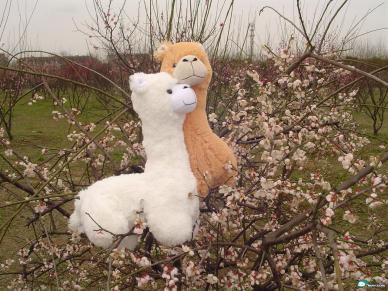 "Stuffed alpaca ""grass mud horse"" toys."