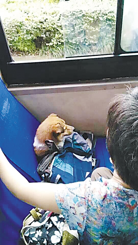 Dog Allowed Own Seat On Bus Due To Second Swipe