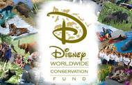 Disney Worldwide Conservation Fund Donates $24,000 to Support Coral Reef Research