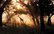 Kilimanjaro Sunset Safari FastPasses available for booking now