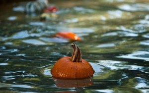 pumpkin-float