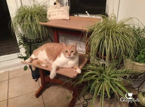 Cat lounging on cat seat