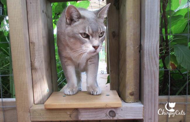 Senior cat in tunnel