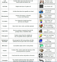 Cell Analogy Worksheet Free Worksheets Library | Download ...