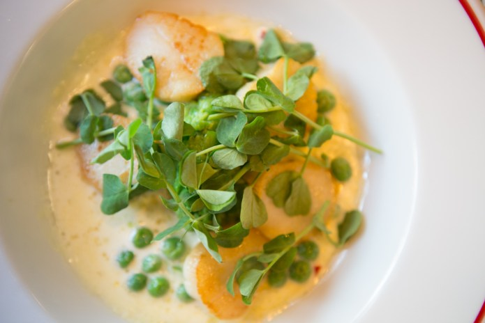 Scallops with petit pois and pea shoots in a cream sauce