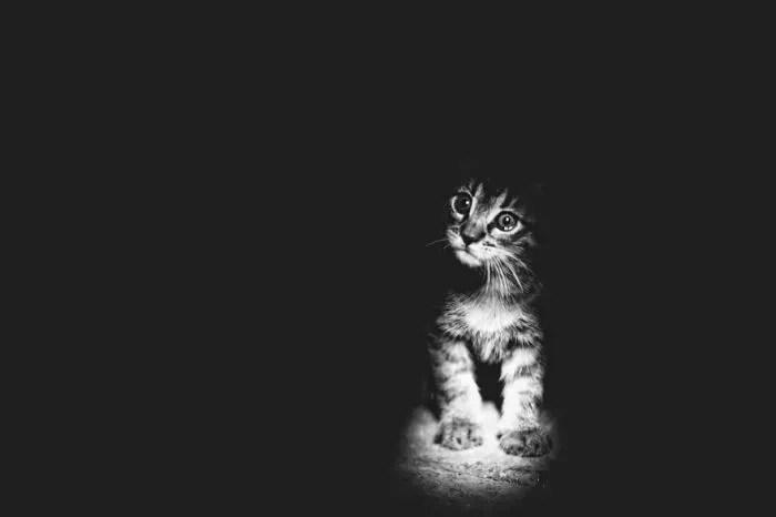 15 черно-бели снимки на котки, в които ще се влюбите
