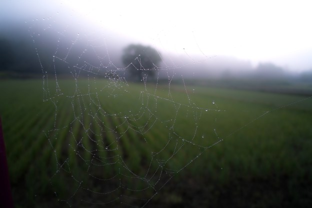 photo-1431051047106-f1e17d81042f-spiderweb