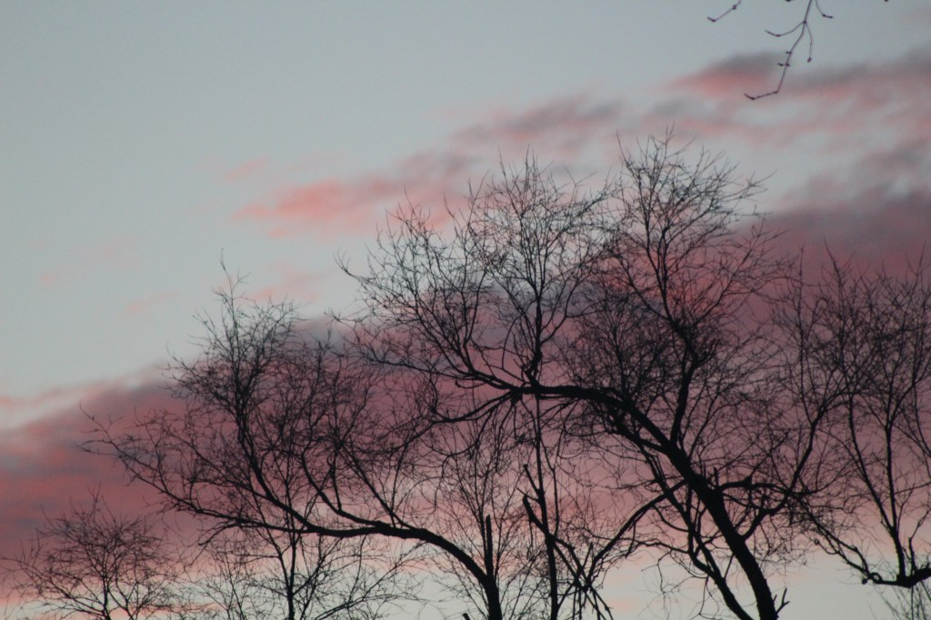 Winter_Sunset_Tree_s