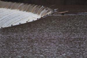 Dam_Upstream2_s.jpg