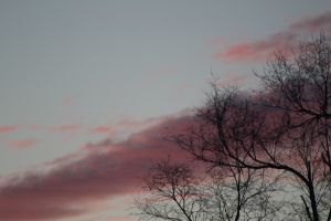 Winter_Sunset_Tree2.JPG
