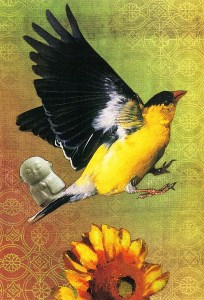 bird buddha 2