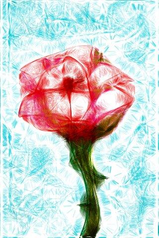 Smiling Rose