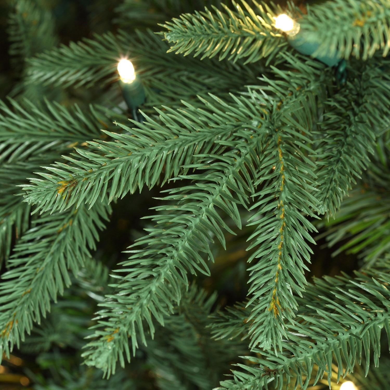 Blue Aspen Fir Tree Tips