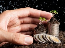 Human hand sheltering coins and young plant