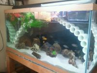 fish tank decorations for cichlids - Aquarium Rock Cave ...