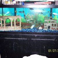 fish tank decorations 75 gallon dimensions