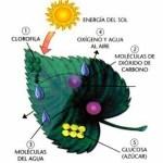 Mecanismo de pigmentación de la hoja