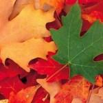 ¿por què  las hojas cambian de color en otoño?