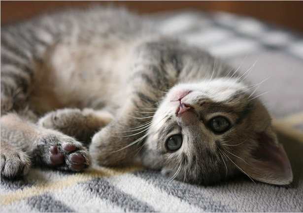 animal-compania-gato-mascota-2