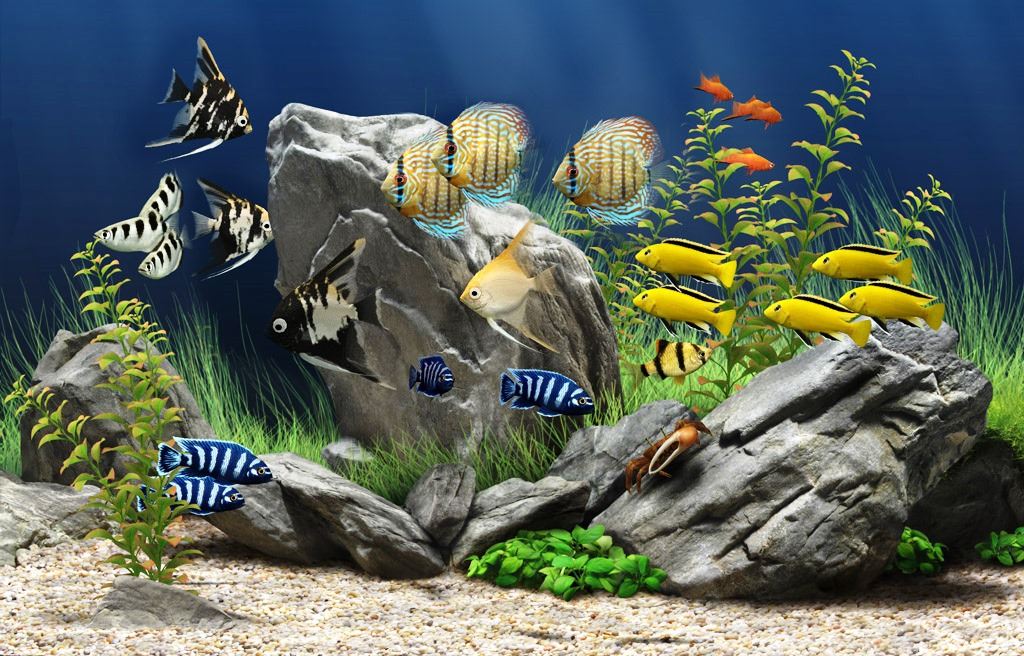 animal-compania-peces-mascota-1