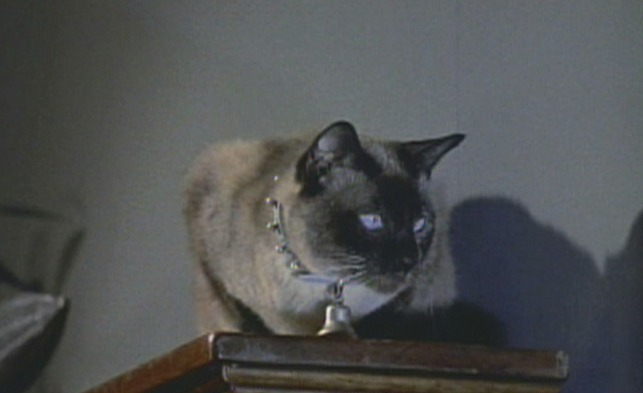 Bell Book And Candle 1958 Cinema Cats