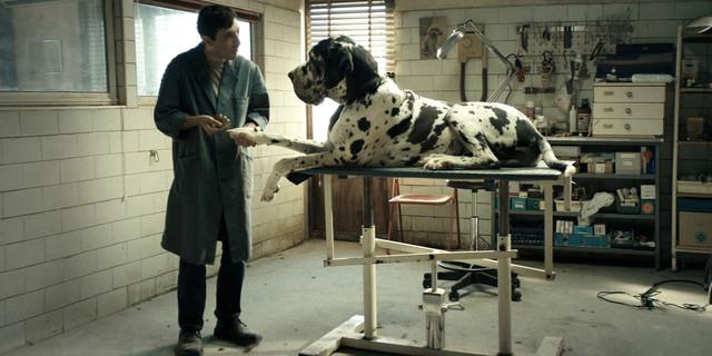 «Dogman», SO #Cannes2018 / sortie DVD