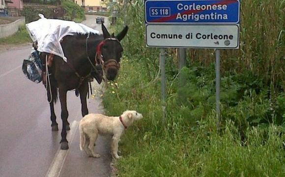 Dalla Sicilia al Lazio per rispettare l'ambiente!